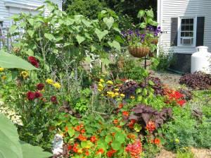 Herb Garden 2008